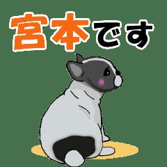 宮本さんが使う名前スタンプ子犬イラスト Line スタンプ Line Store