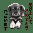 2018新年おめでとう犬