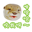 chiro is an otter (chinese ver.)