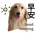 Dachshund Pudding dog
