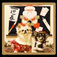 Chihuahua's Chobi and Vicke A New Year