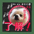 【ヒナ友祭り】お友達たくさん(修正版)