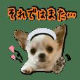 Chihuahua's latte wanko sticker