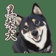 "Black Shiba Inu ""KUROMAME"" sticker"