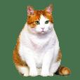 Niko's Cat ver.2