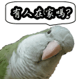 Cute parrots like to chat! (Chinese)