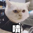 Meow's talk