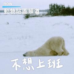 動物星球頻道 動物觀察語錄:職場篇