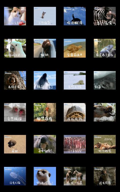 Go Absolutely Wild! Office Animal Memes