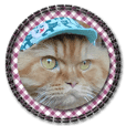 """My Cat Photo """"Mana,Woo and Chi"""""""