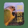 birdoflife