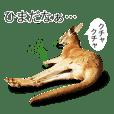 Kangaroo's Boyaki