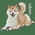 the Real Shiba Inu