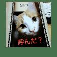 pinkkittycat