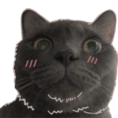 TaoTao Cat