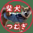 Shibainu Tsumugi 9