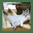 保護猫スタンプニャン