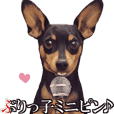 MOVING STICKER OF MINIATURE PINSCHER 3