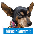 German-speaking minpin&poodle