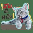 ฟูจิ : แมวหน้าตลก