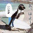 1173 (good wave) surfing, penguin