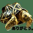 Real Tortoises
