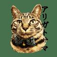 可愛いキジトラ猫スタンプ