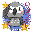 African grey parrot JET