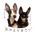 Lovely Pet Dogs 2