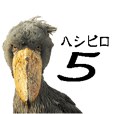 shoebill5