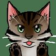 Cai-Little Tiger