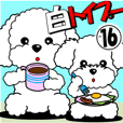 White Toy Poodle 16
