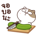 Tofu Cat: Trendy Hits