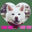 秋田犬の椿