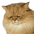 しょんぼり猫「ふーちゃん」