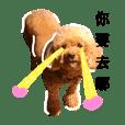 mei-mei dog