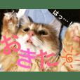 Chacha_cat