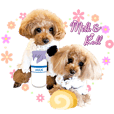 toypoodle milk&roll