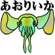 The bigfin reef squid of Bonin Islands