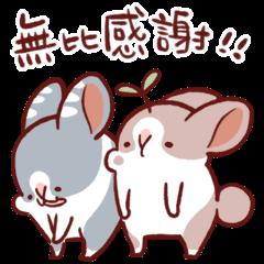 肥兔寶 - 動感系兔子