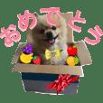 【COCOの挨拶】ヒナちゃんのお友達