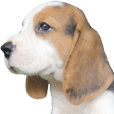 Nimo Beagle (Eng. Version)