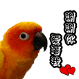 Cute parrots like Valentine's Day!