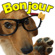 The dog who calls Bonjour