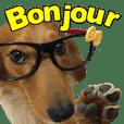 臘腸狗-崩啾Bonjour(日常用語)