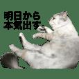 twins cat okinawa