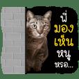 Life of Meow