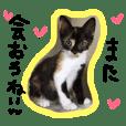 Kitty of three tortoiseshell cat