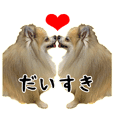 Love Pomeranian Junco