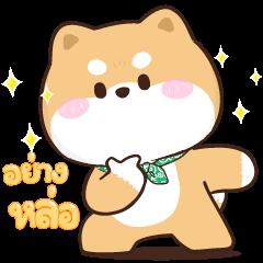 Shibung & Bingsu: Pop-Ups
